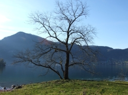 Lebensbaum, Sinnbild der drei Sphären der Welt: Himmel - Erde - Anderswelt (See)