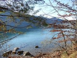 Vergänglich und immergrün zeigt sich das Leben am See