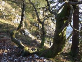 Mutterbaum und Tochterbaum wurzeln im selben Boden