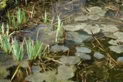 15-04-12-wandel-jahreszeiten-weis-47