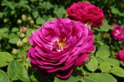 15-06-07-traumgarten-rote-gottin-120