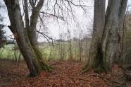 16-11-13-traumgarten-zeit-der-schwarzen-gottin-283