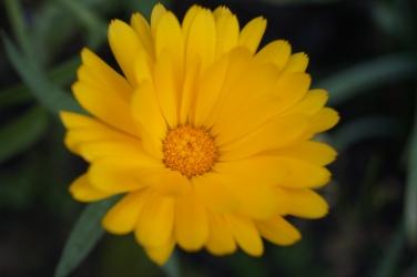 Höglwörth im Herbstzauberkleid (11)