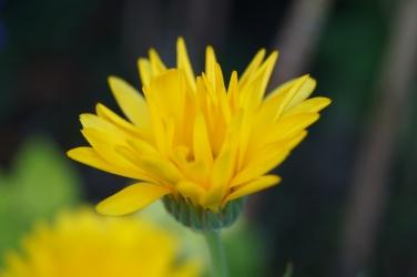 Höglwörth im Herbstzauberkleid (12)