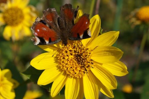 Höglwörth im Herbstzauberkleid (23)