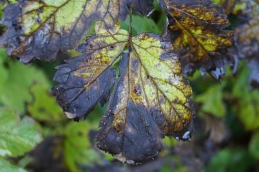 Höglwörth im Herbstzauberkleid (33)