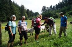 18-07-18 wildes-Weiba-Wandern Buchberg 30