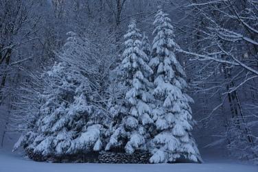 19-01-11 winterimpressionen (10)