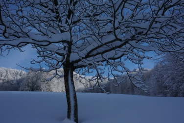 19-01-11 winterimpressionen (11)