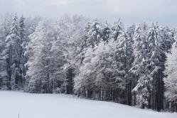 19-01-11 winterimpressionen (2)
